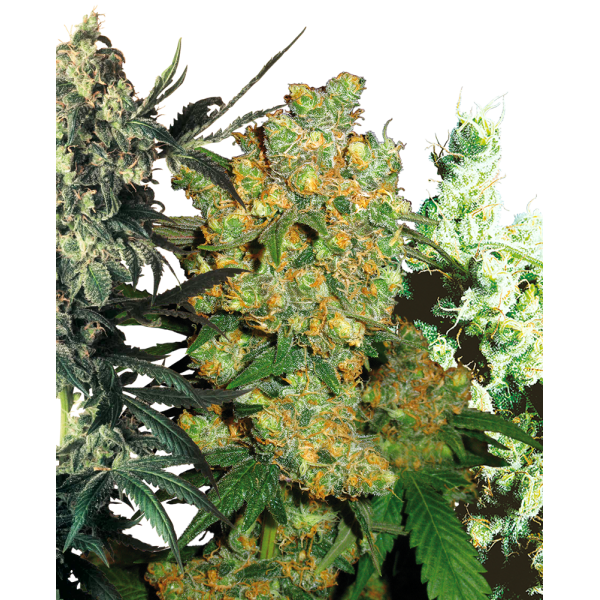 Mixed Strains Pre-Order