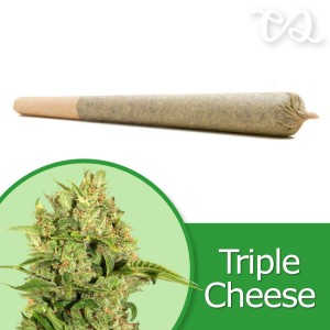 Triple Cheese Pre-Rolled Cone